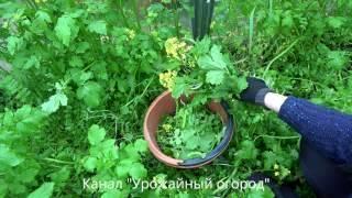 Натуральные удобрения для огорода своими руками 52